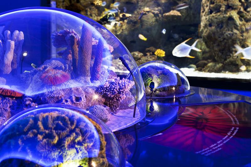 Аквариум (Istanbul Akvaryum) в ТЦ Aqua Florya